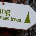 Caring Christmas Trees