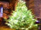 Community Tree Lighting – Sunday 3rd December
